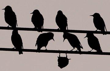 upsidedownbird.jpg