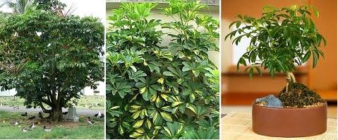 Fitorremediaci n del aire interior las plantas Plantas limpiadoras de aire