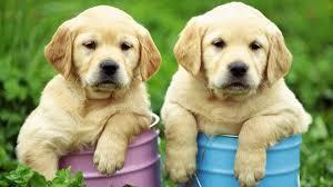que-numero-jugar-en-la-loteria-si-sueño-con-perros