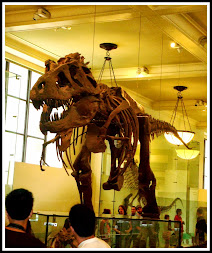 Museum of Natural History, NYC, NY