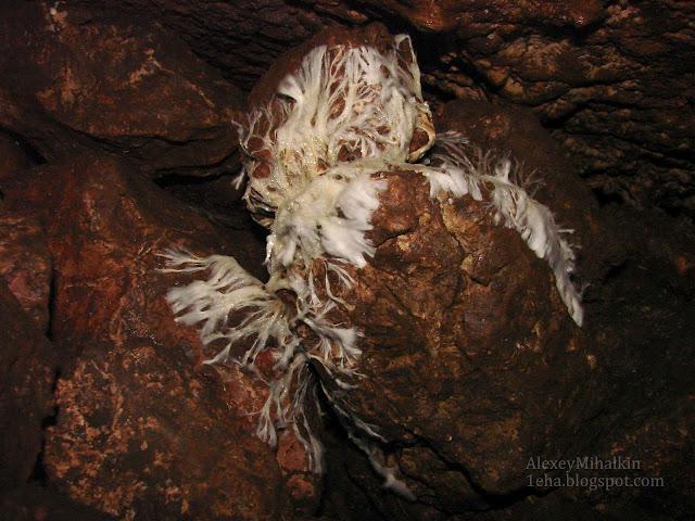 Плесень в пещере