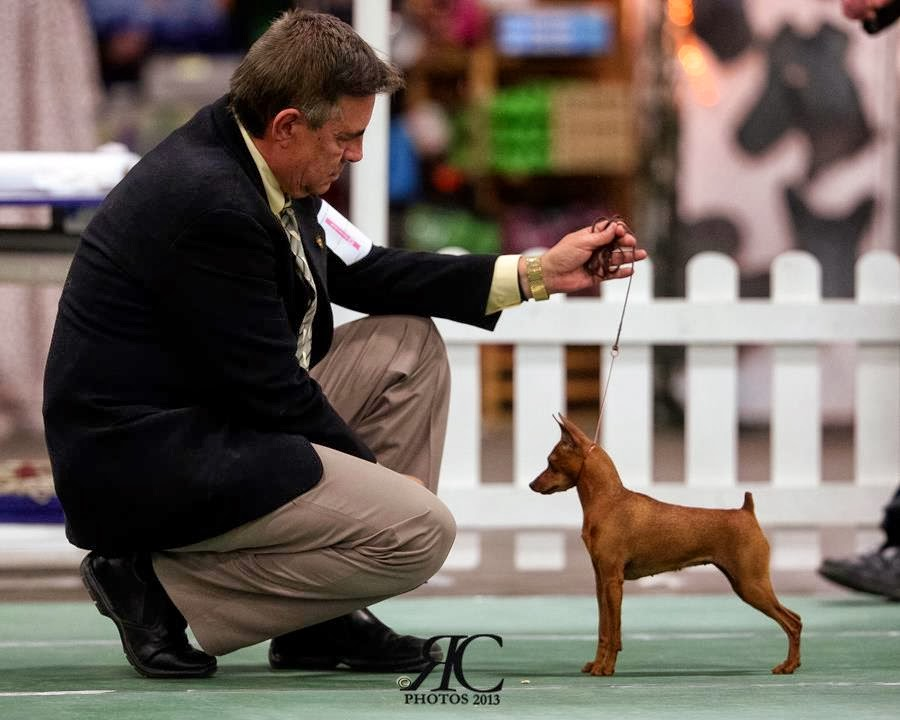 Dog Show Poop Great Dane Takes Two In Florida
