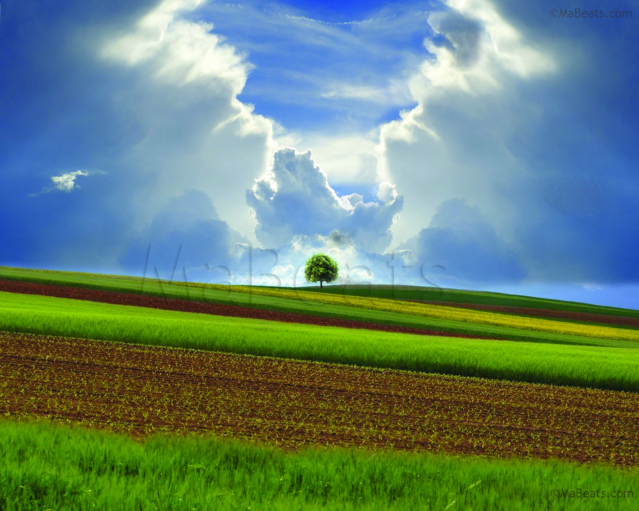 Tree standing alone in a green farm field with the cloudy blue sky background. best for desktop wallpaper