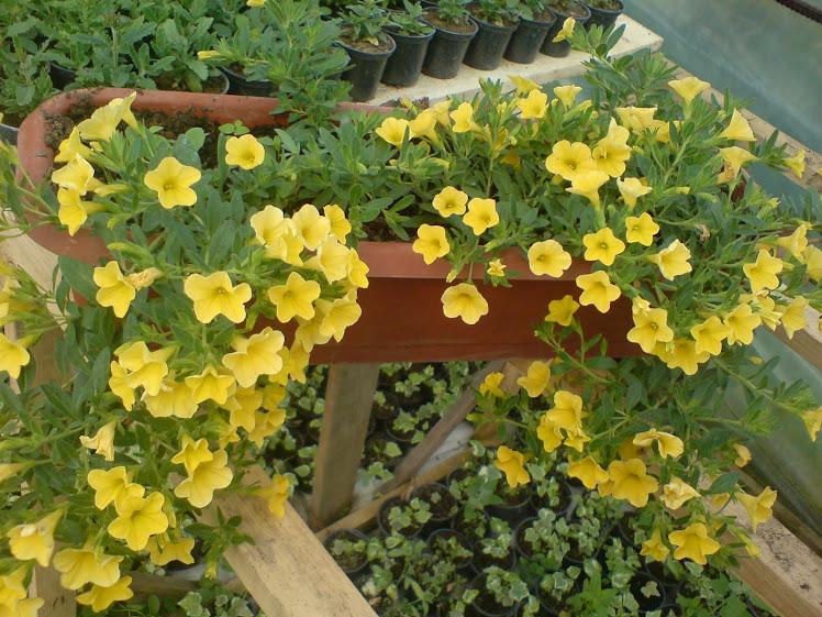 Cvijece za balkone