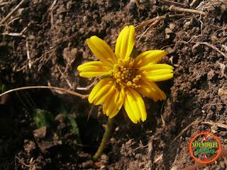 Bunga Mekar di Tanah Tandus