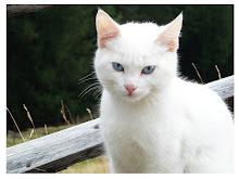 Warrior-Lotusmoon-she-cat