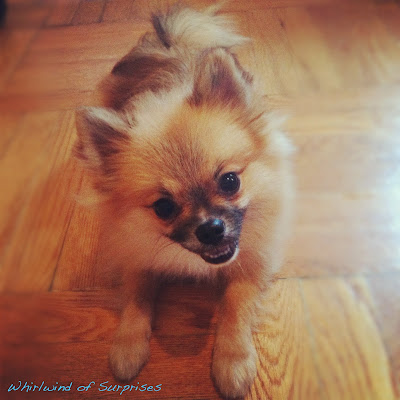 #BabyPom, apartment living, guide