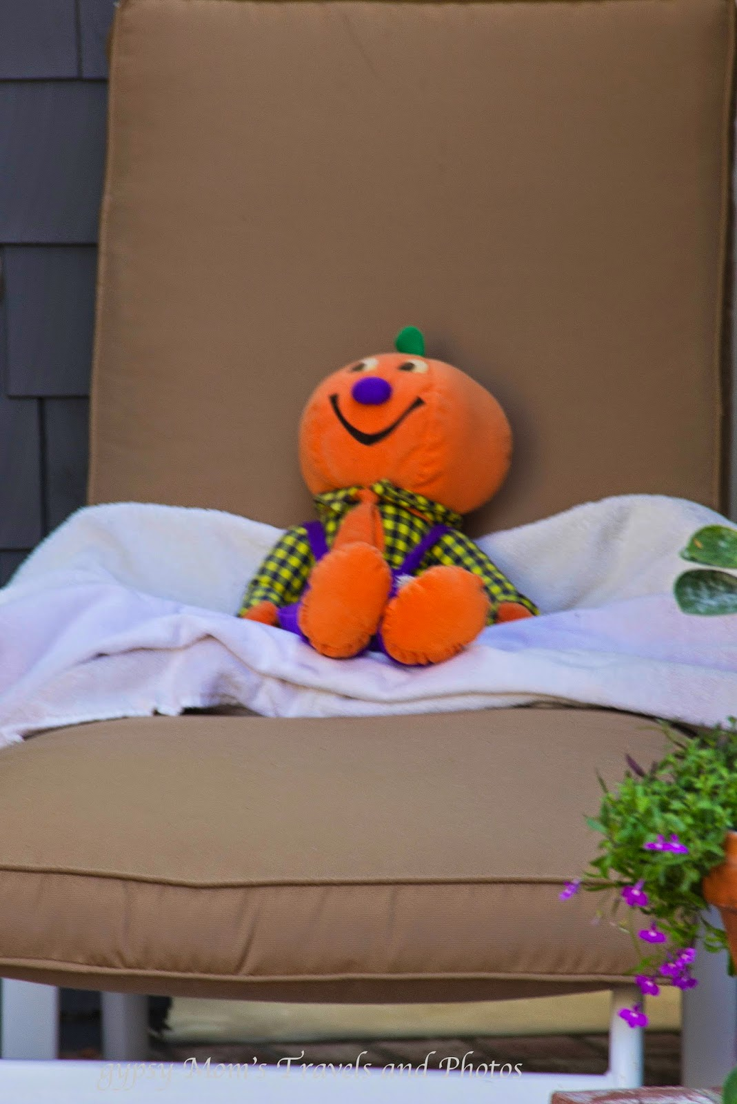 Mr. Pumpkin resting on chaise lounge in front of house on Balboa Island