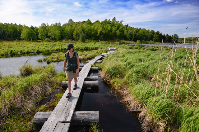 boardwalk bridges below the beaver dam at Washington Mtn. Marsh in western MA (photo by Ben Kimball)