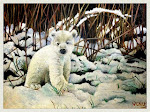 Polar bear_winter