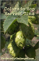 Colorado Hop Harvest Time