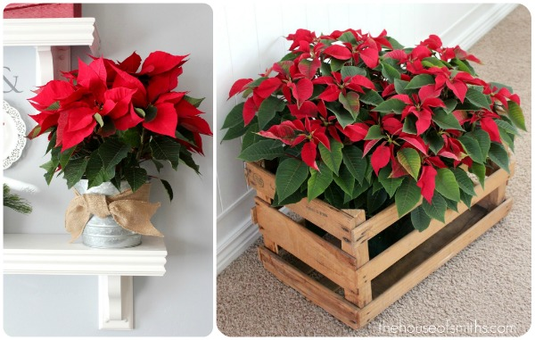 Decorating With Poinsettias Thehouseofsmiths