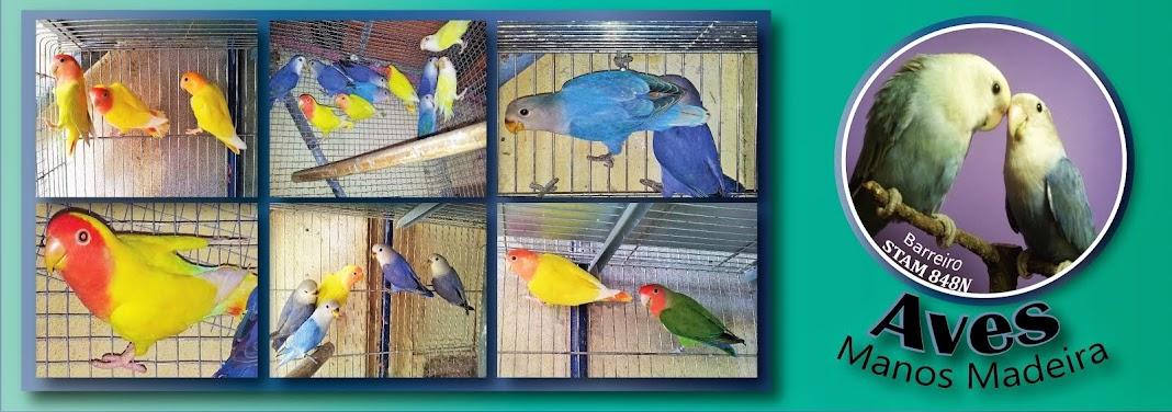 Aves Manos Madeira