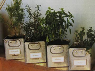 Nuestro huerto escolar el jard n de la cocina - Cultivo de hierbas aromaticas en casa ...