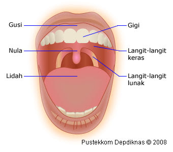 Gambar Mulut dan Bagian-bagiannya