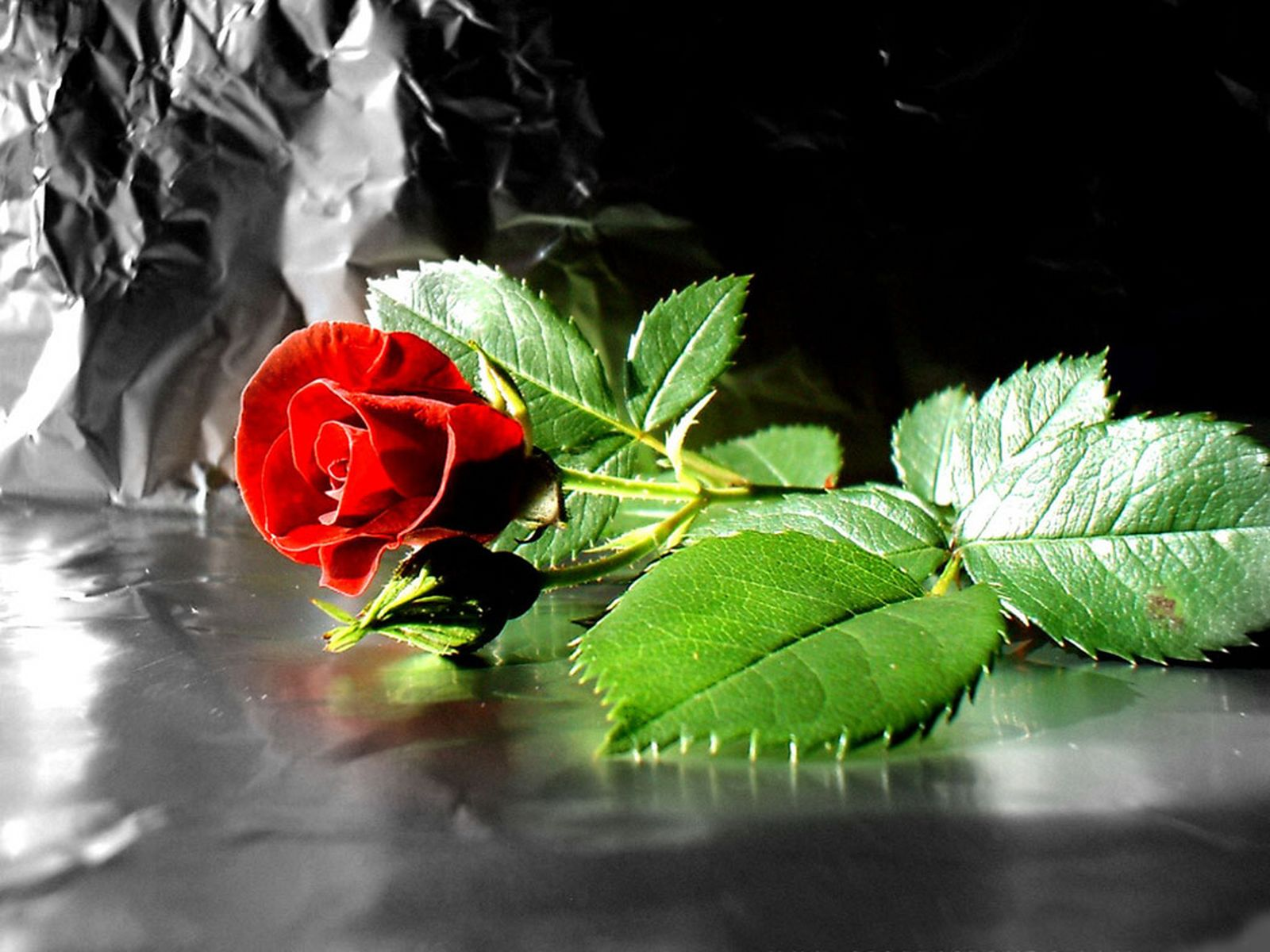 Natural Roses: Meaning of Red Roses