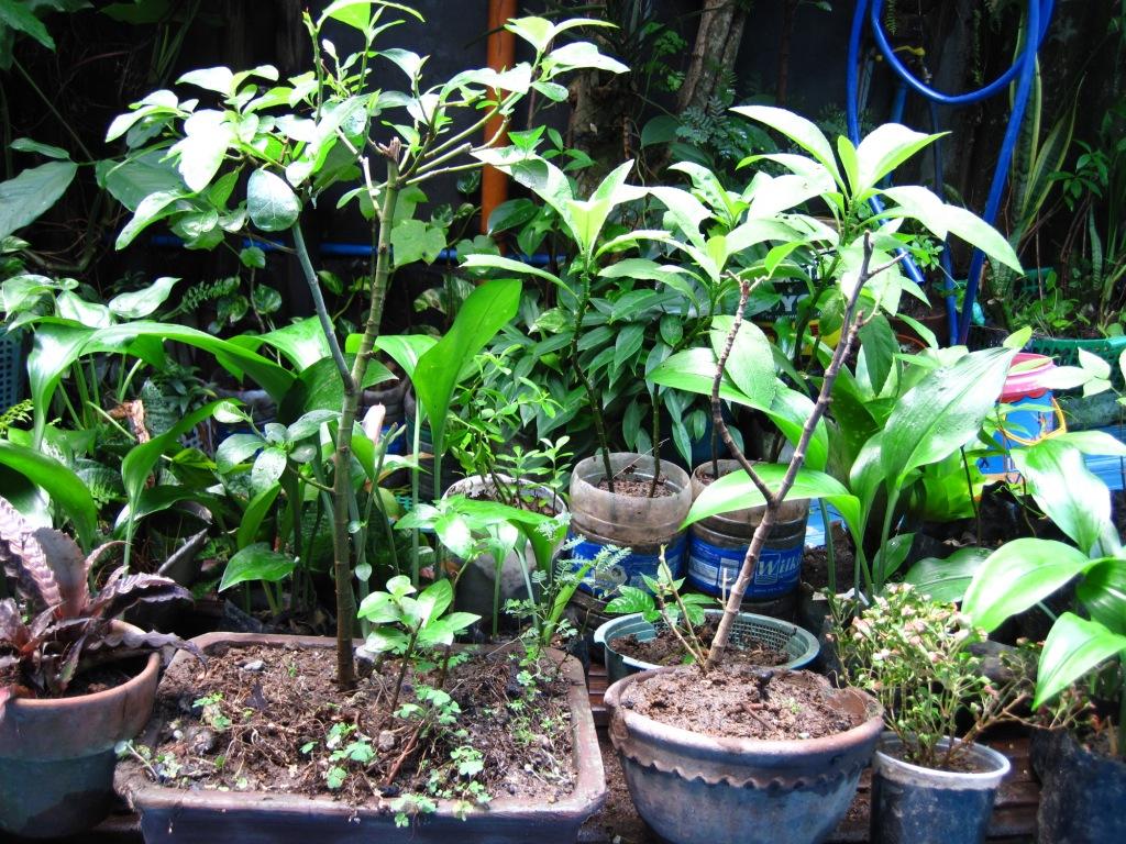 Barefootroamer My Roof Garden