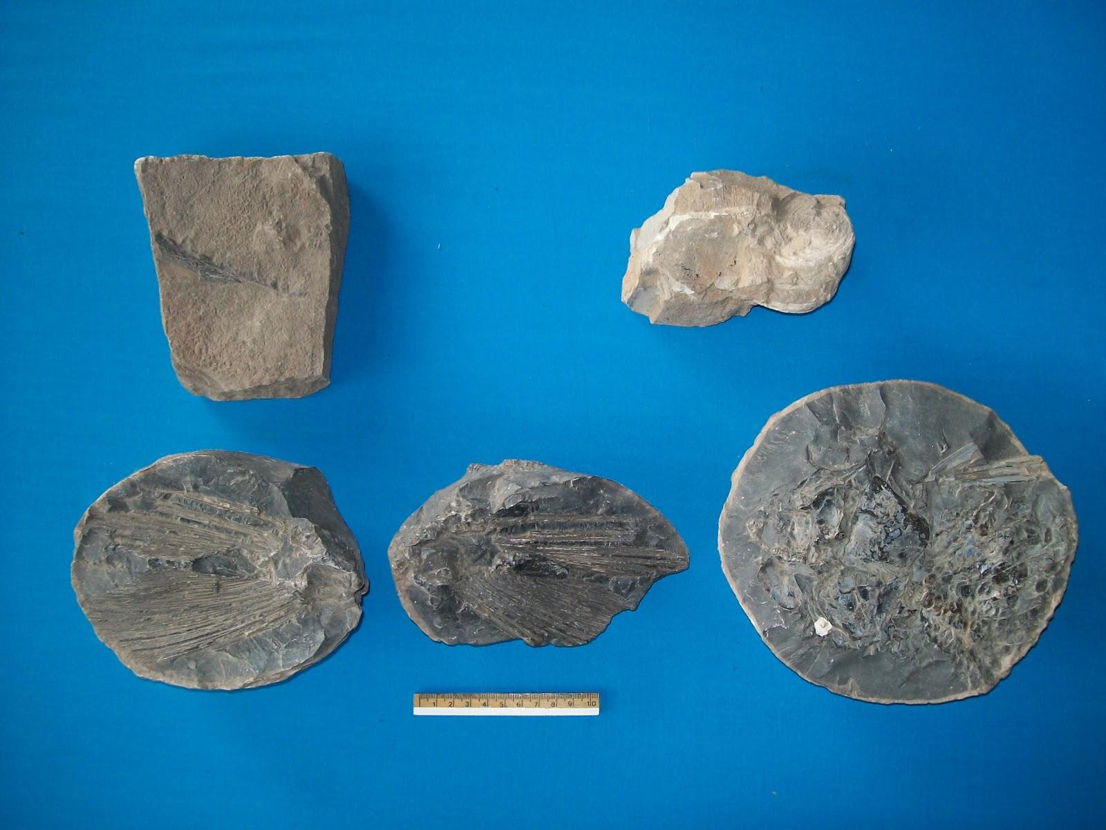 yacimientos pez fosil espana: