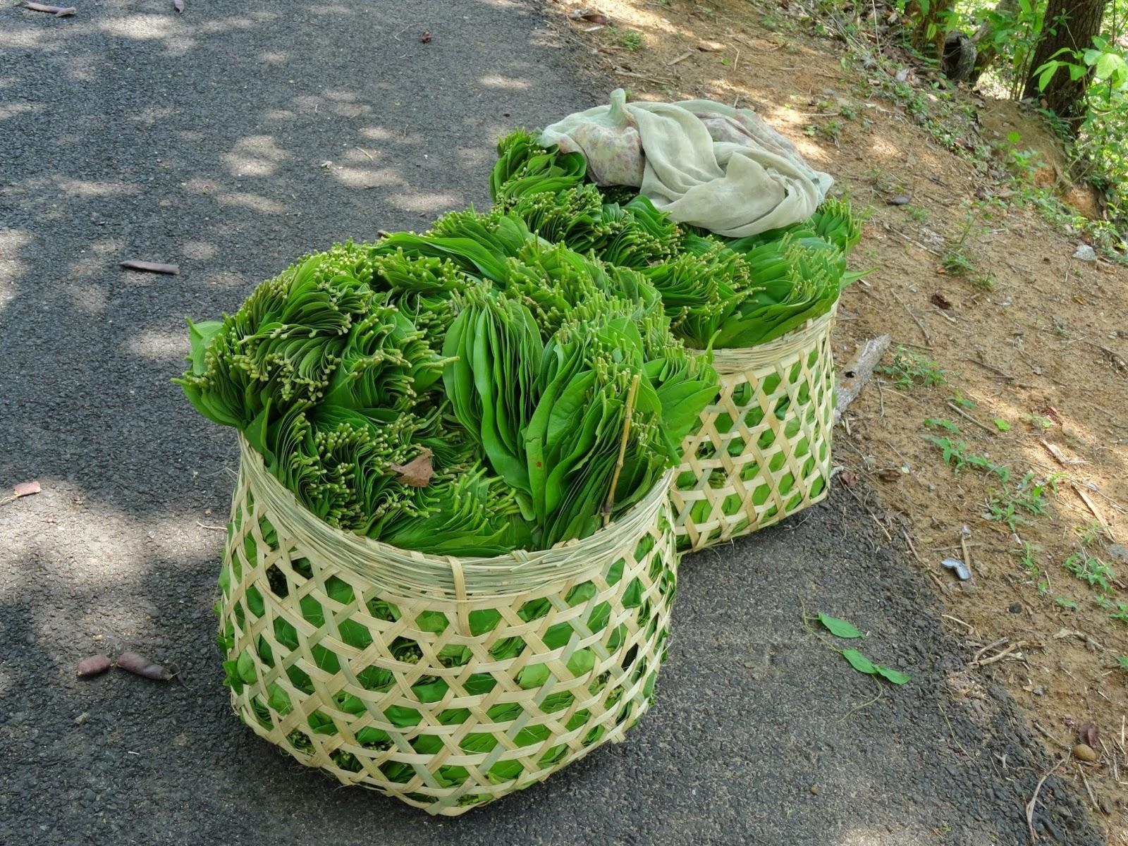 beedi leaves