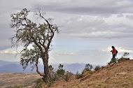 En las Quewiñas