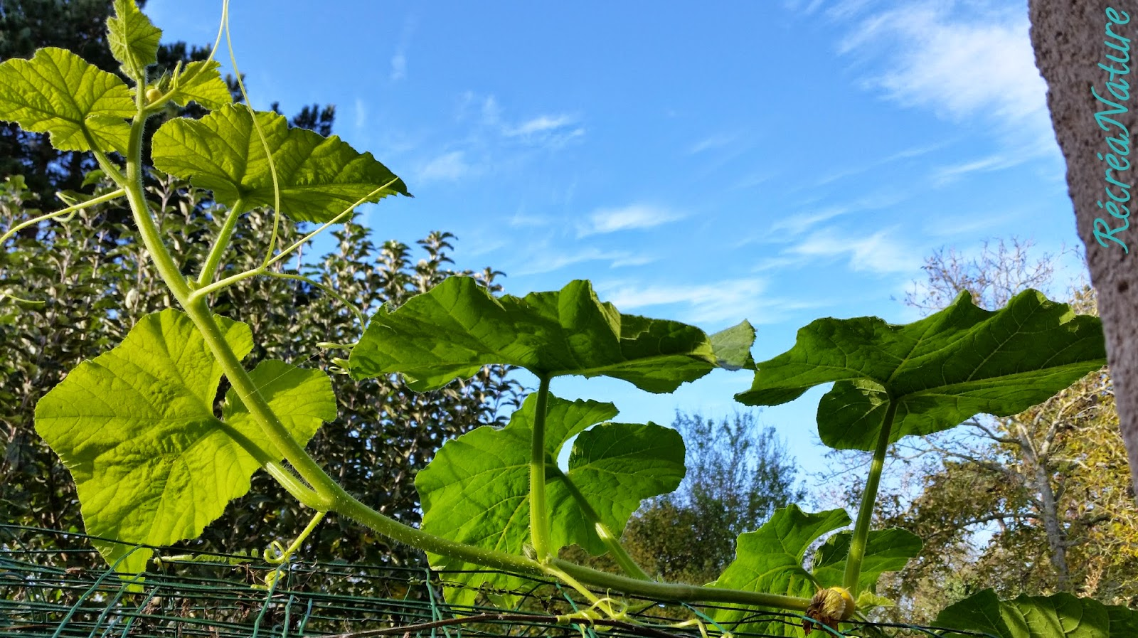 Que trouve t on dans mon jardin mi novembre - Jardin novembre ...