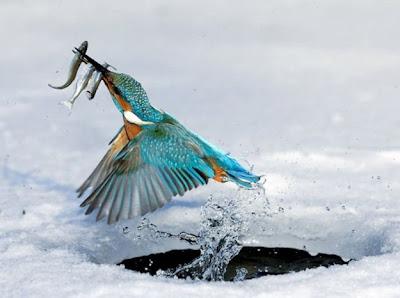 صور للحيوانات رائعة