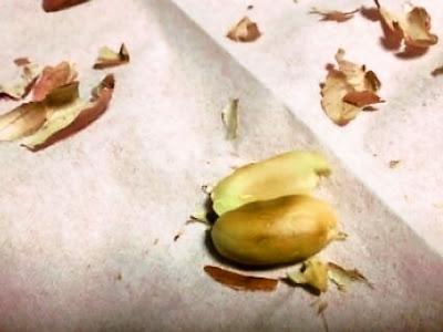 煎り落花生 ピーナッツ