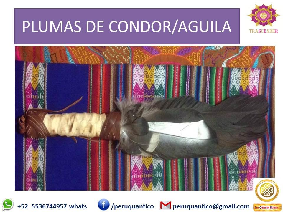 PLUMAS DE CONDOR O AGUILA