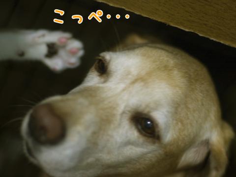 子猫が犬に攻撃