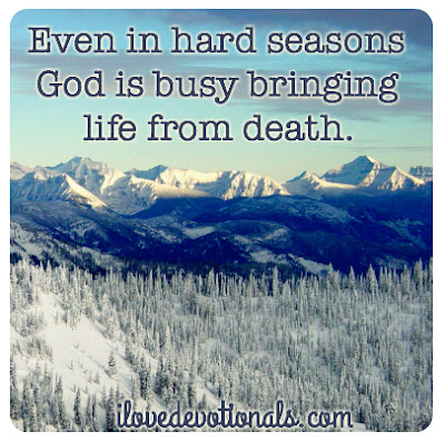 Even in hard seasons God is busy bringing life from death
