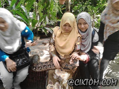 melarikan diri dari ular sawa batik