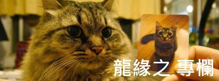 動保人【龍緣之】專欄