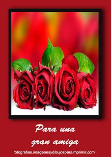 rosas rojas para una amiga Fotos de rosas rojas para facebook