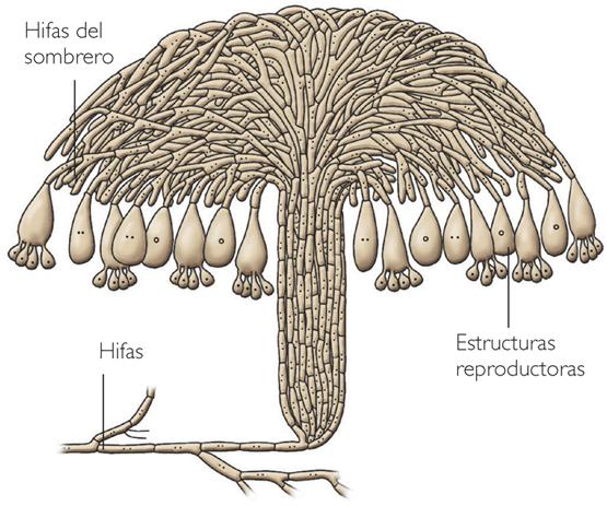 Como curar el hongo sobre las epidermis