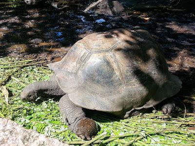 Riesenschildkröten-Gehege auf La Digue