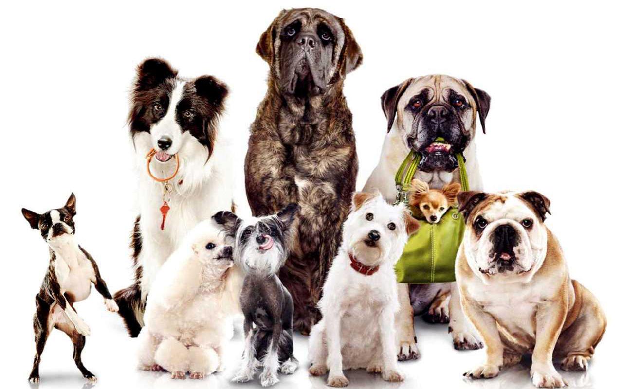 Гостиница для собак в Москве