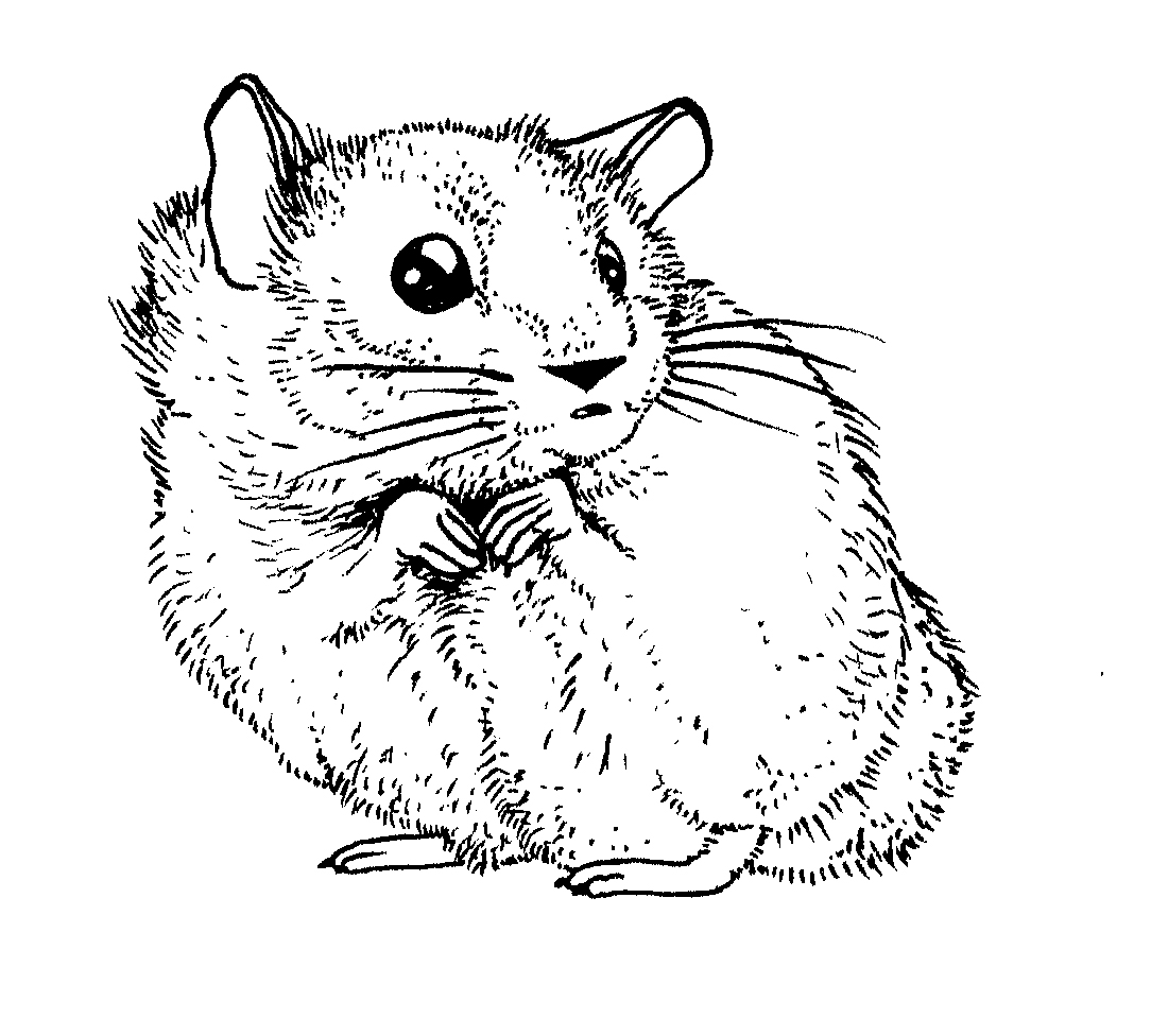 Free coloring pages hamsters - Making Natural History In Public Lincoln Park Zoo Coloring Books