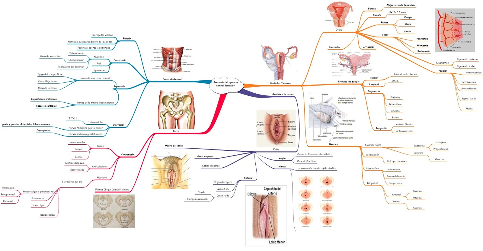 Ginecología y Obstetricia: Anatomía del aparato genital femenino