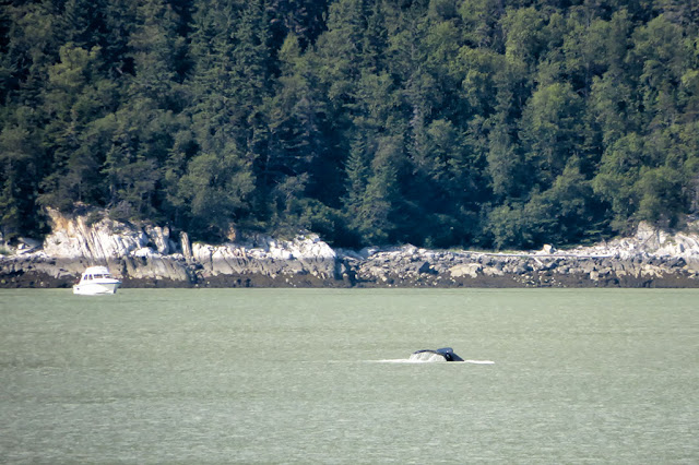 Whale tail in Skagway, Alaska