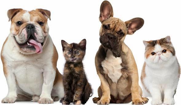 probioticos para perros y gatos