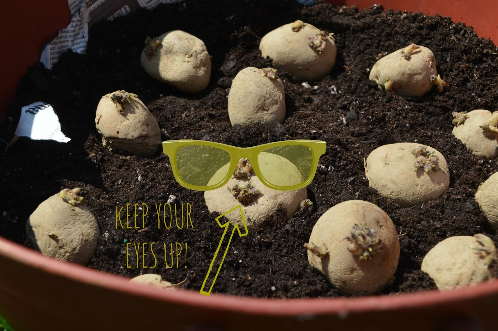 How To Grow A Container Potato Garden