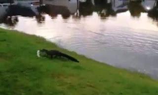 تمساح يسرق سمكة من فتاة تصطاد !