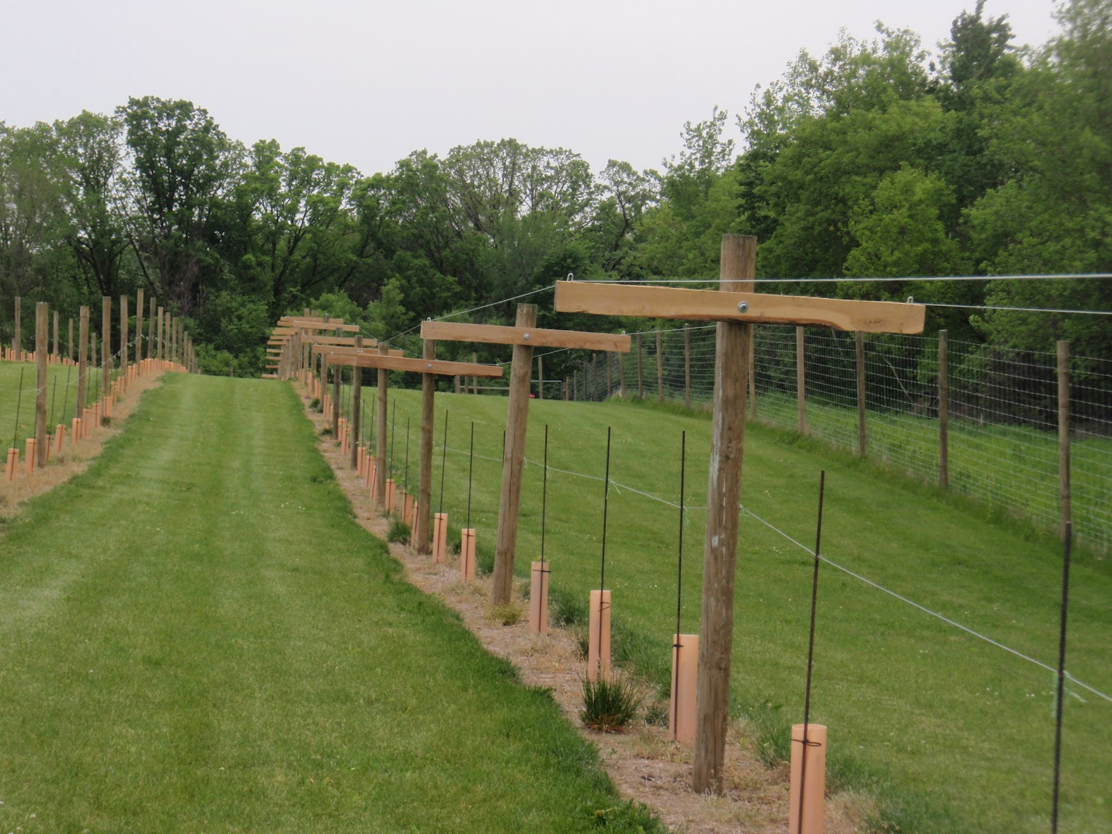 Bluff Stone Vineyard Completing The Geneva Double Curtain