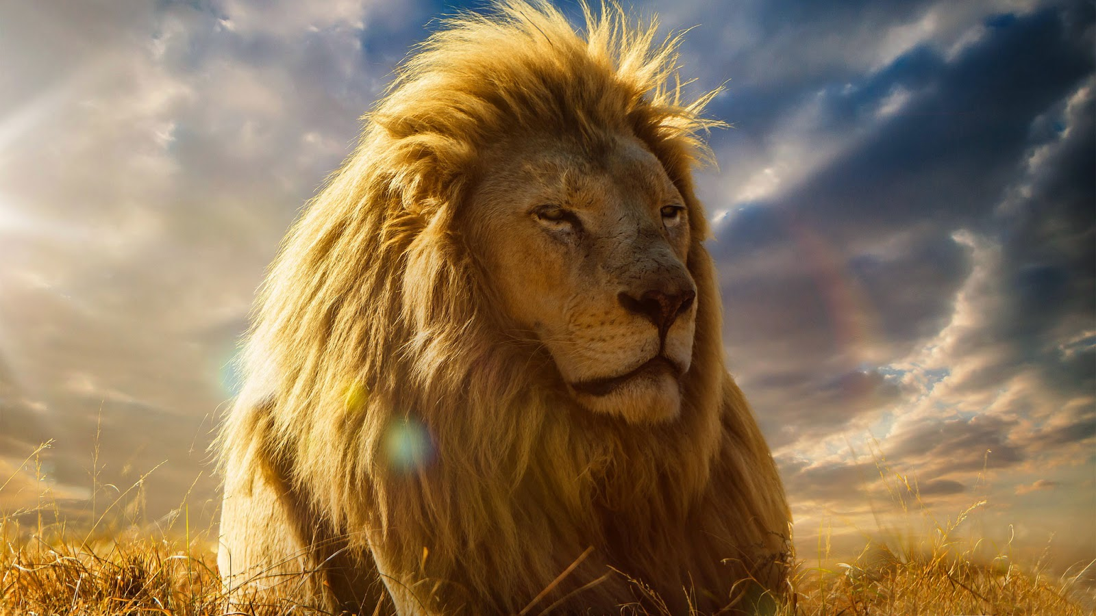 Papel de parede animal selvagem Rei Leão da África