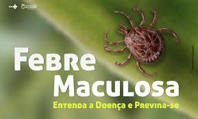Febre maculosa, ou febre do carrapato, transmissão da doença e os riscos