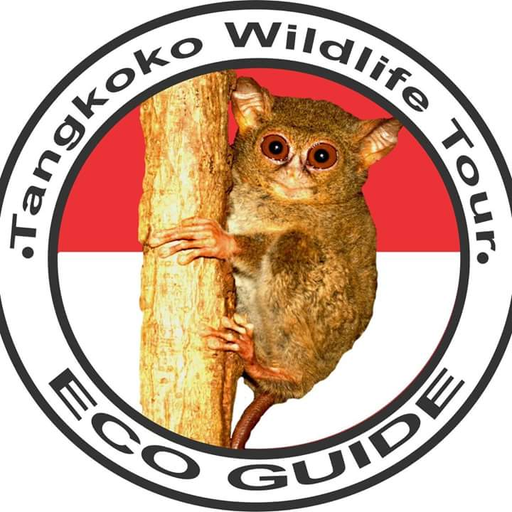 Tangkoko wildlife-tour