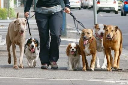 DOG SITTER