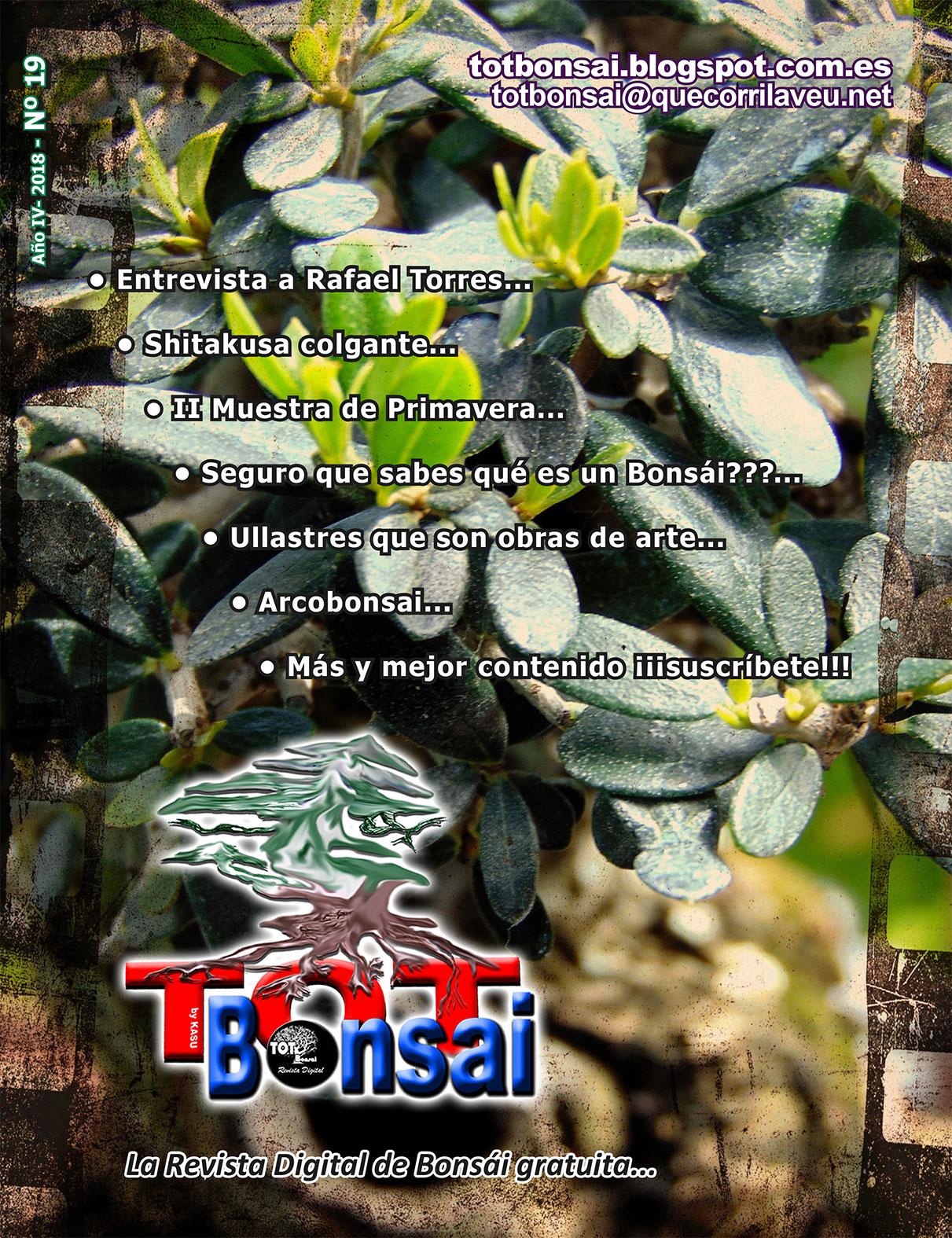 DR 19 TOT Bonsai