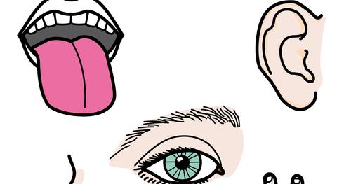 El blog de l s maestr s de audicion y lenguaje unidad for El divan de los sentidos