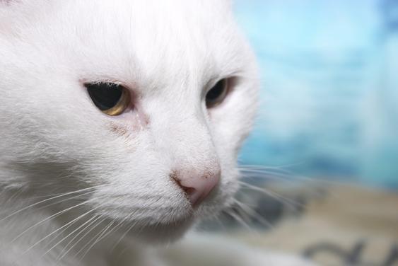 Ilmoita kissan katoamisesta löytölään
